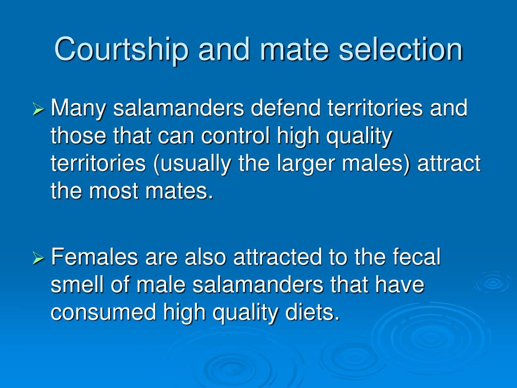 Courtship and mate selection
