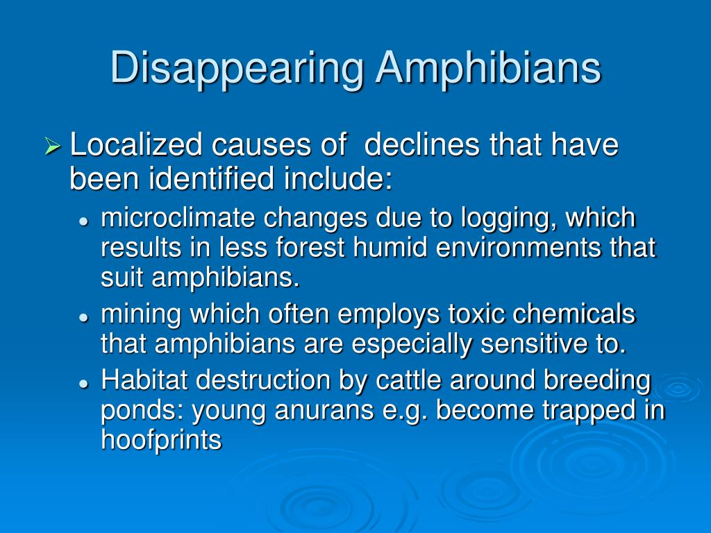 Disappearing Amphibians