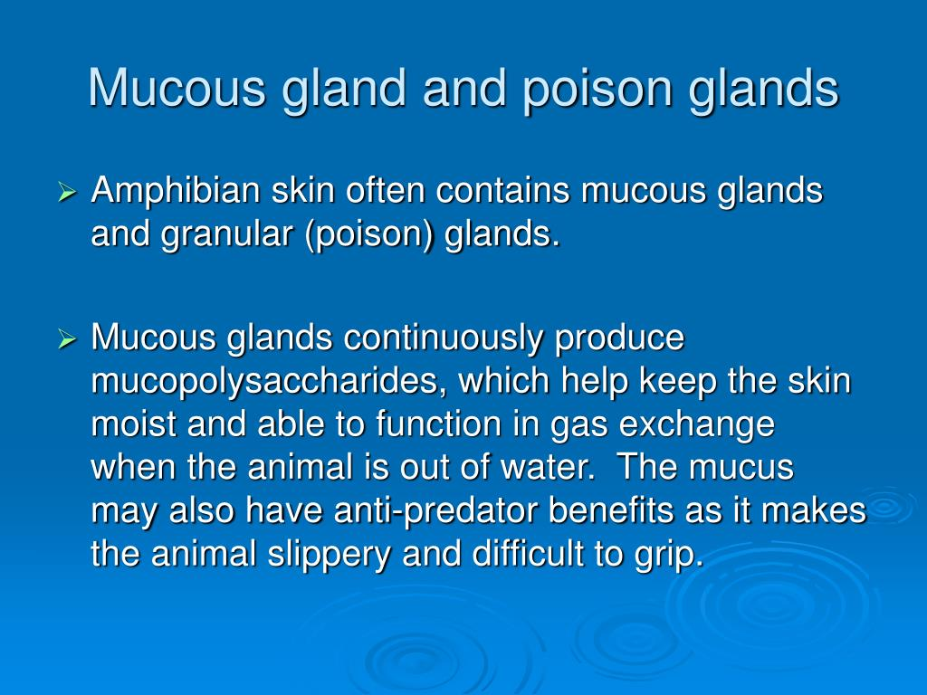 Mucous gland and poison glands