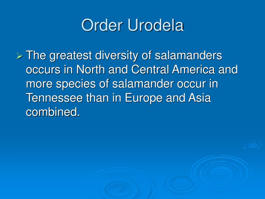 Order Urodela