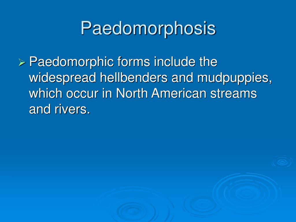 Paedomorphosis