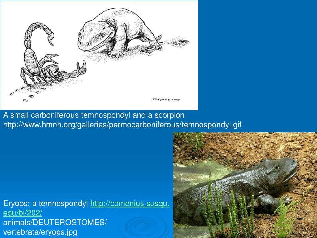 A small carboniferous temnospondyl and a scorpion