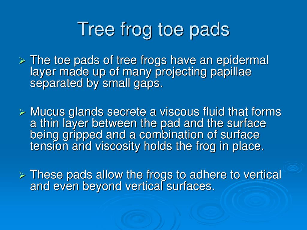 Tree frog toe pads