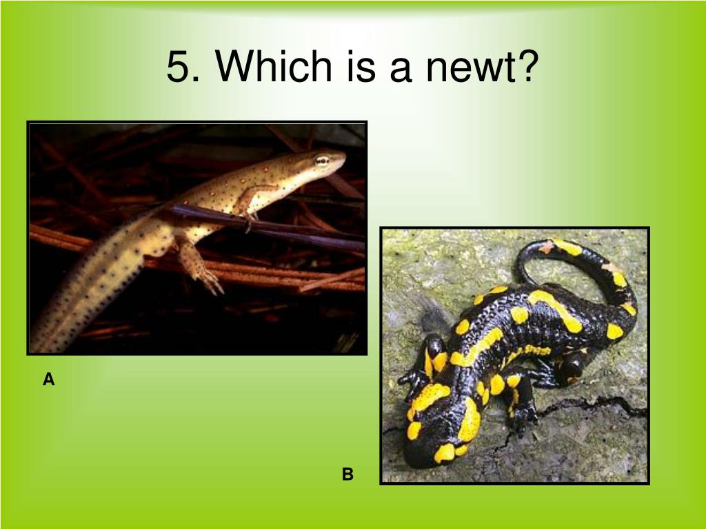 5. Which is a newt?