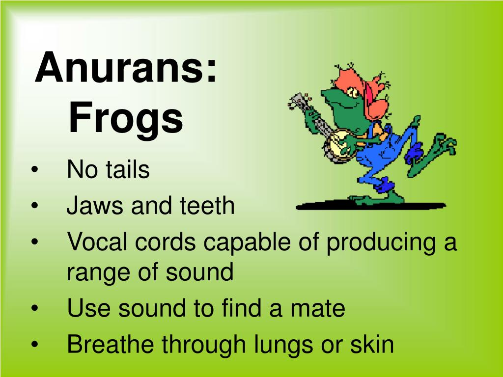 Anurans: Frogs