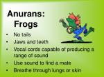 anurans frogs