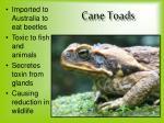 cane toads