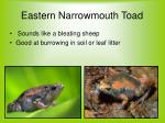eastern narrowmouth toad