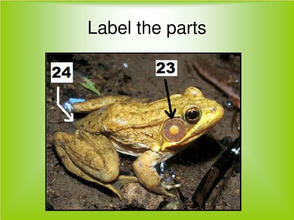 Label the parts