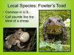 local species fowler s toad