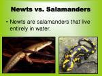 newts vs salamanders