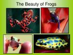the beauty of frogs