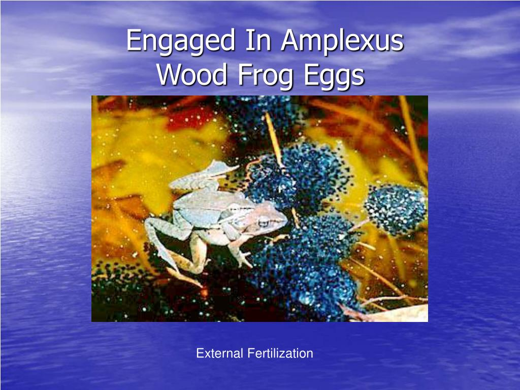 Engaged In Amplexus