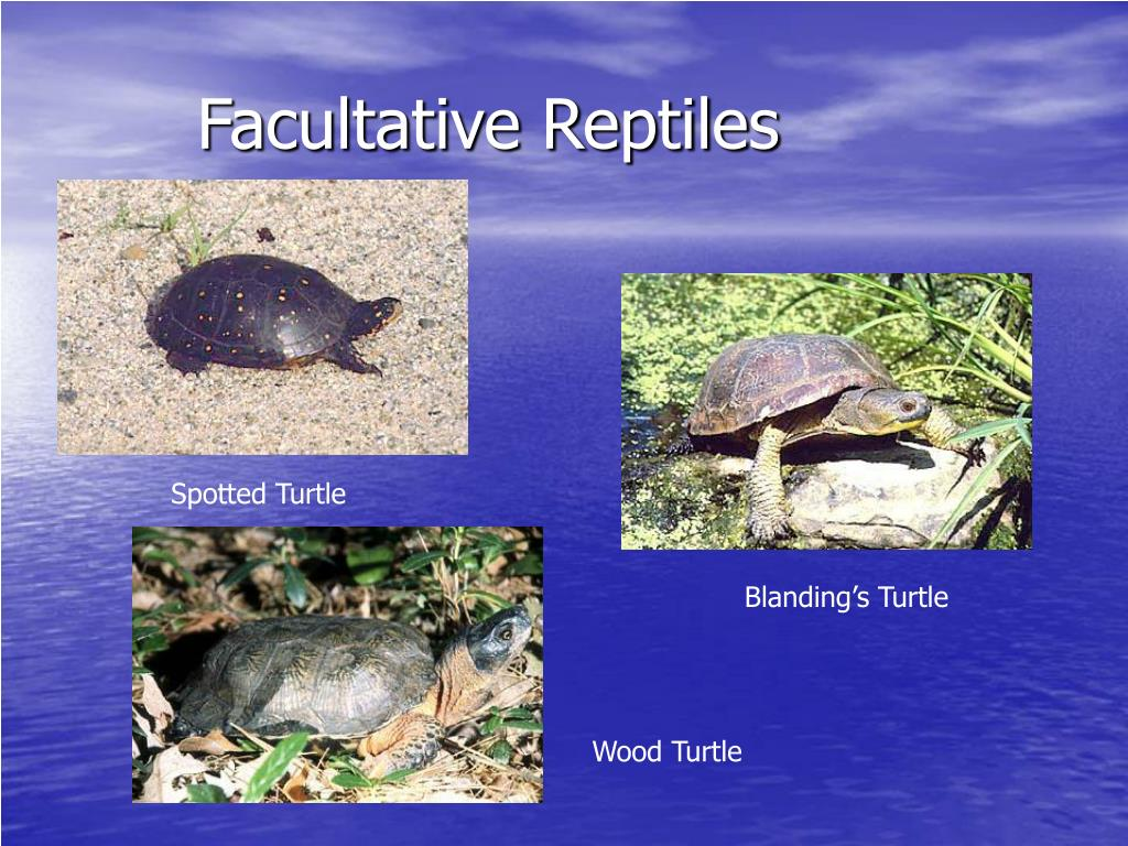 Facultative Reptiles