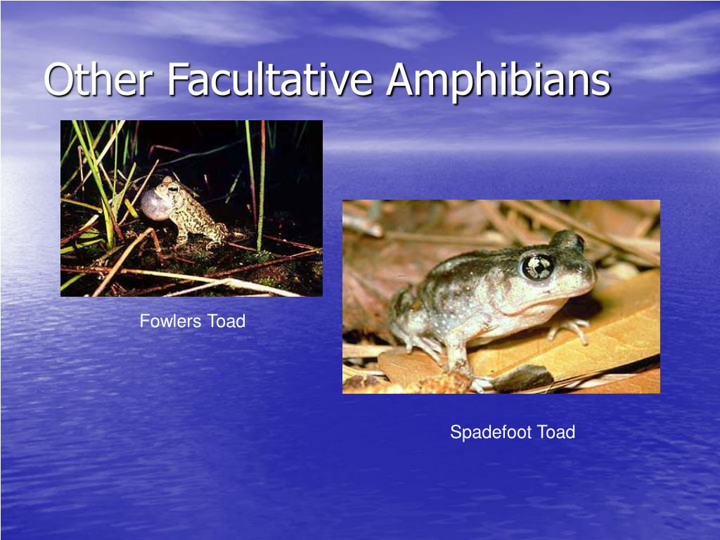 Other Facultative Amphibians