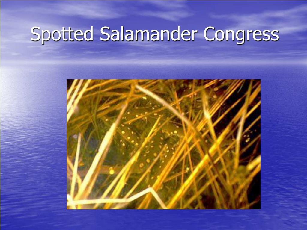 Spotted Salamander Congress