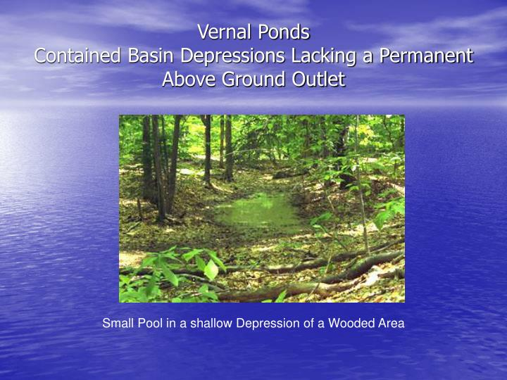 Vernal ponds contained basin depressions lacking a permanent above ground outlet l.jpg
