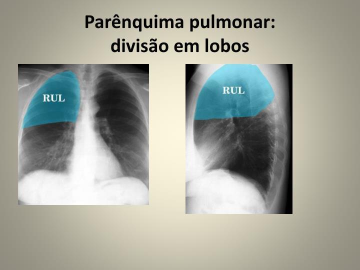 Parênquima pulmonar: