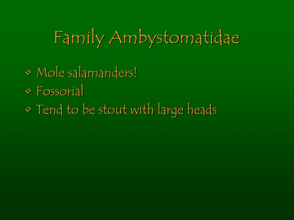 Family Ambystomatidae
