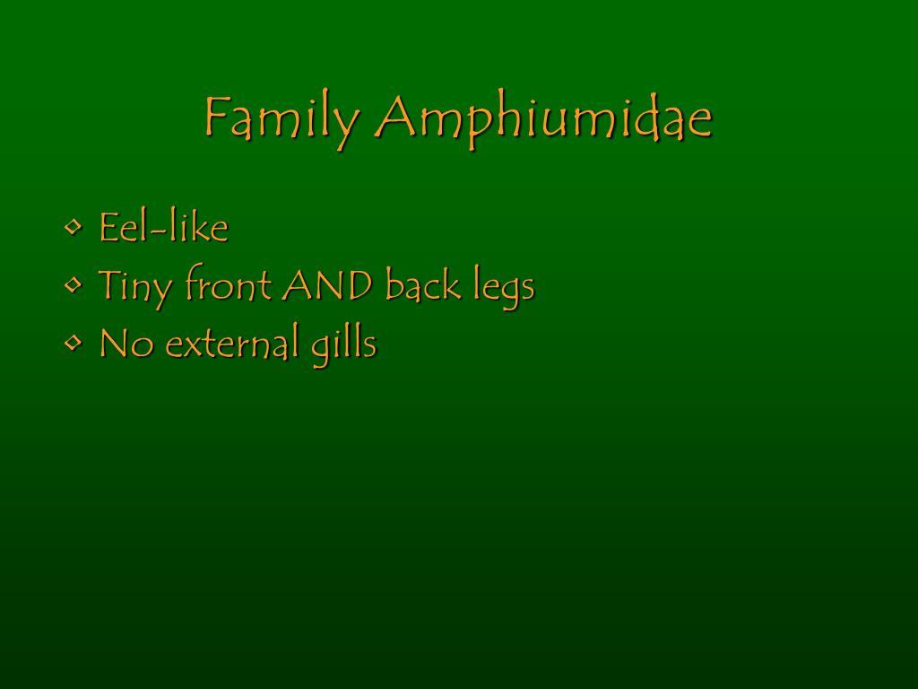 Family Amphiumidae