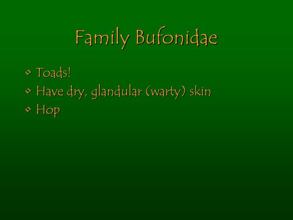 Family Bufonidae