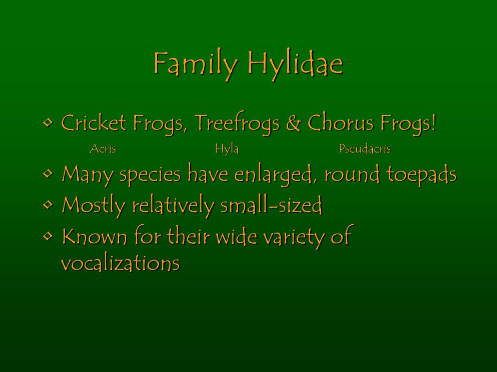 Family Hylidae