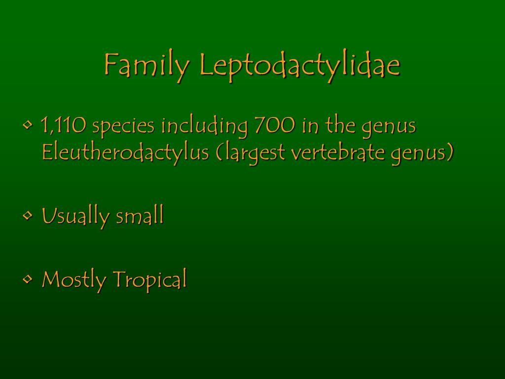 Family Leptodactylidae