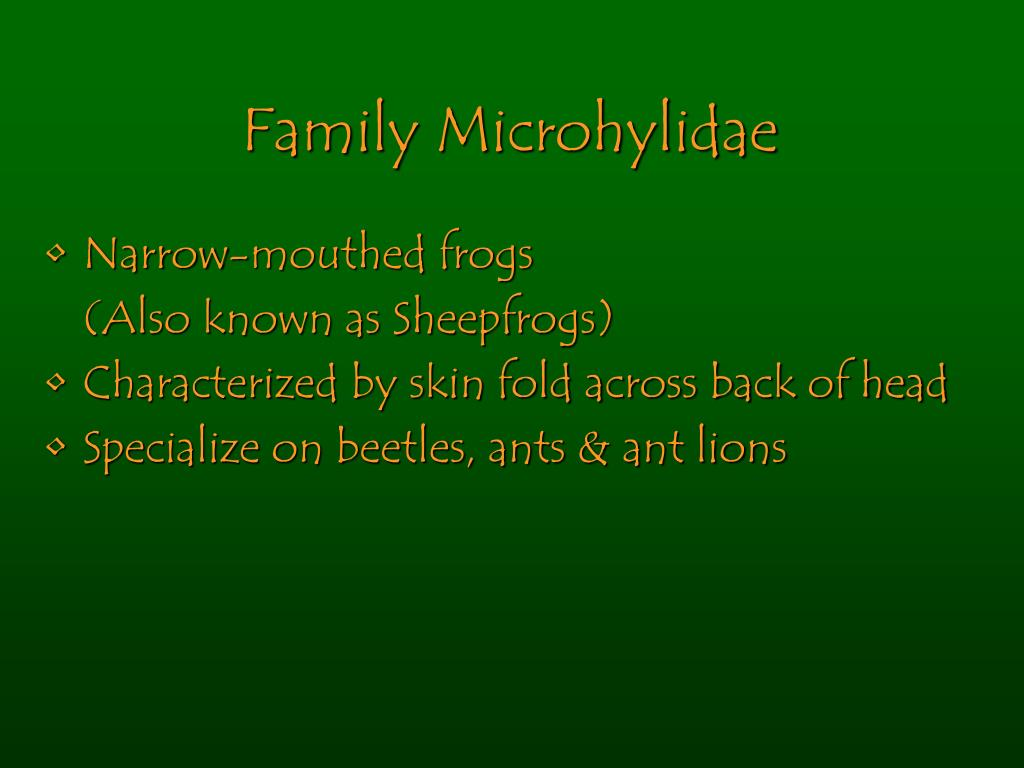 Family Microhylidae