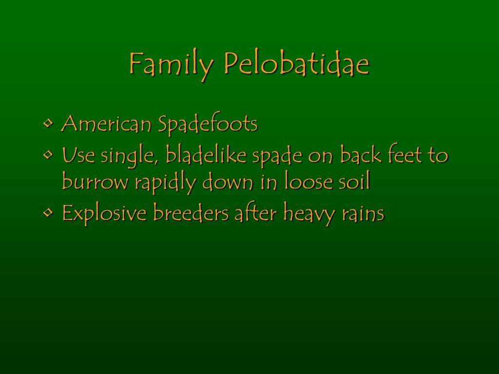 Family Pelobatidae