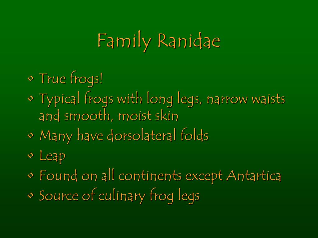 Family Ranidae