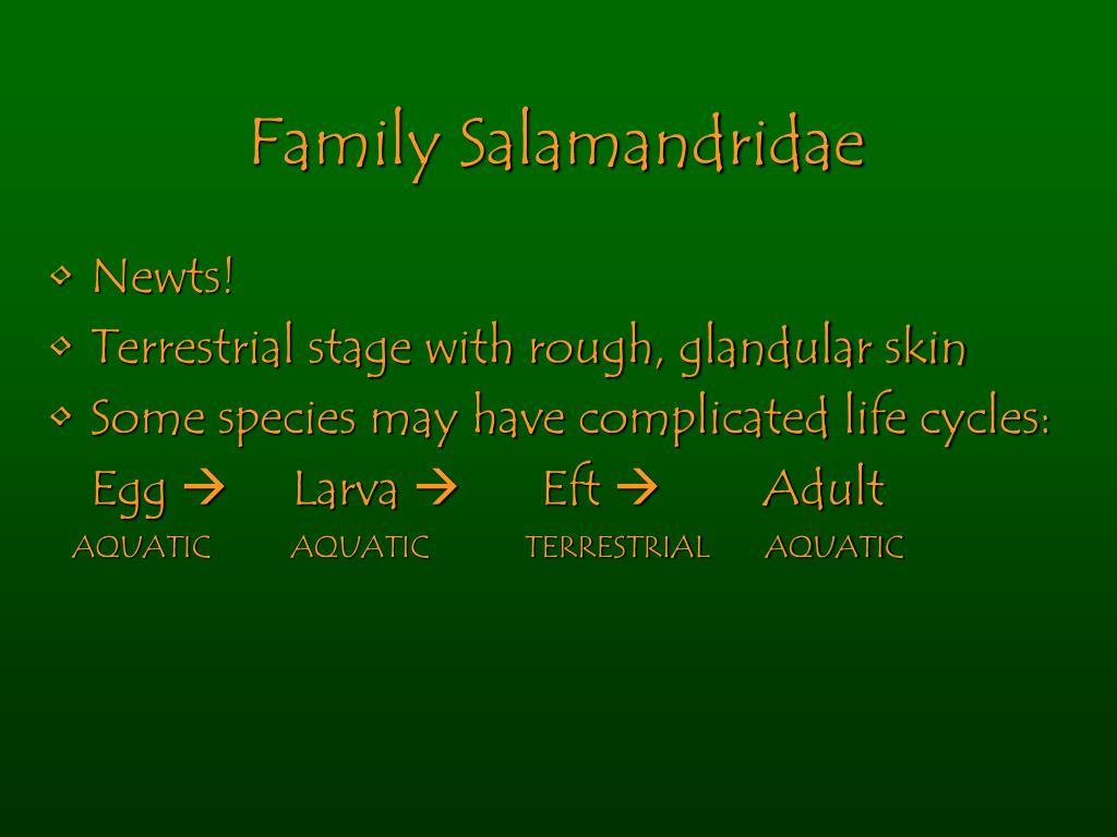 Family Salamandridae