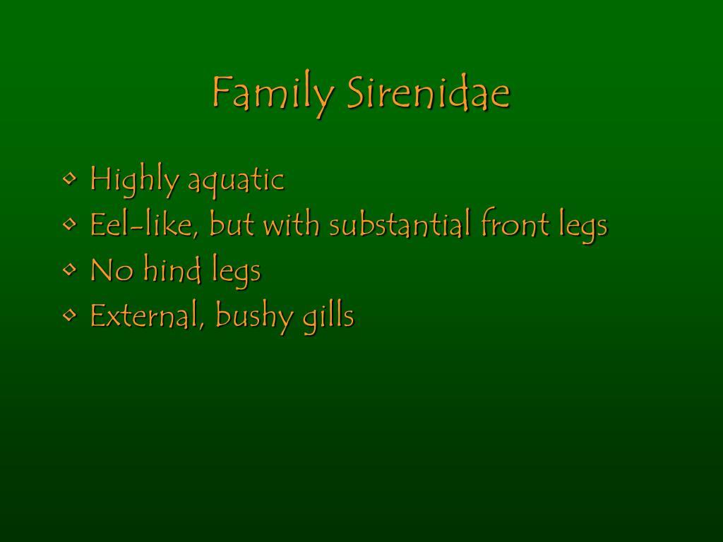 Family Sirenidae