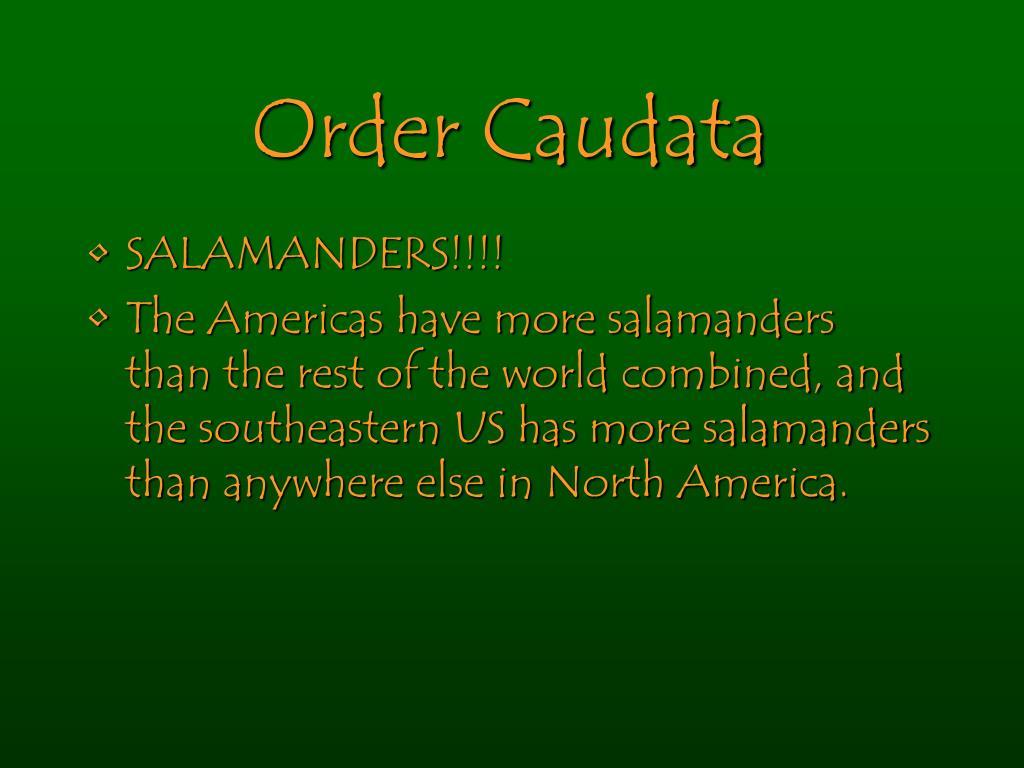 Order Caudata