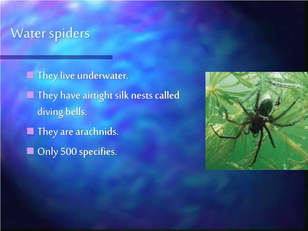 Water spiders