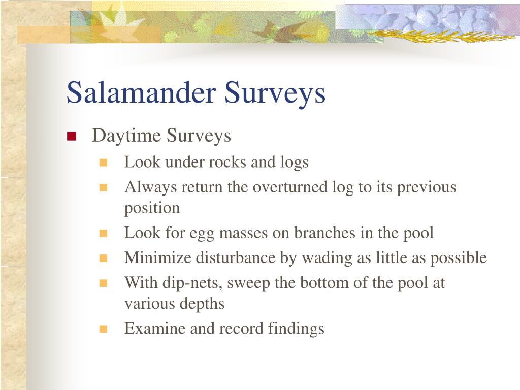 Salamander Surveys