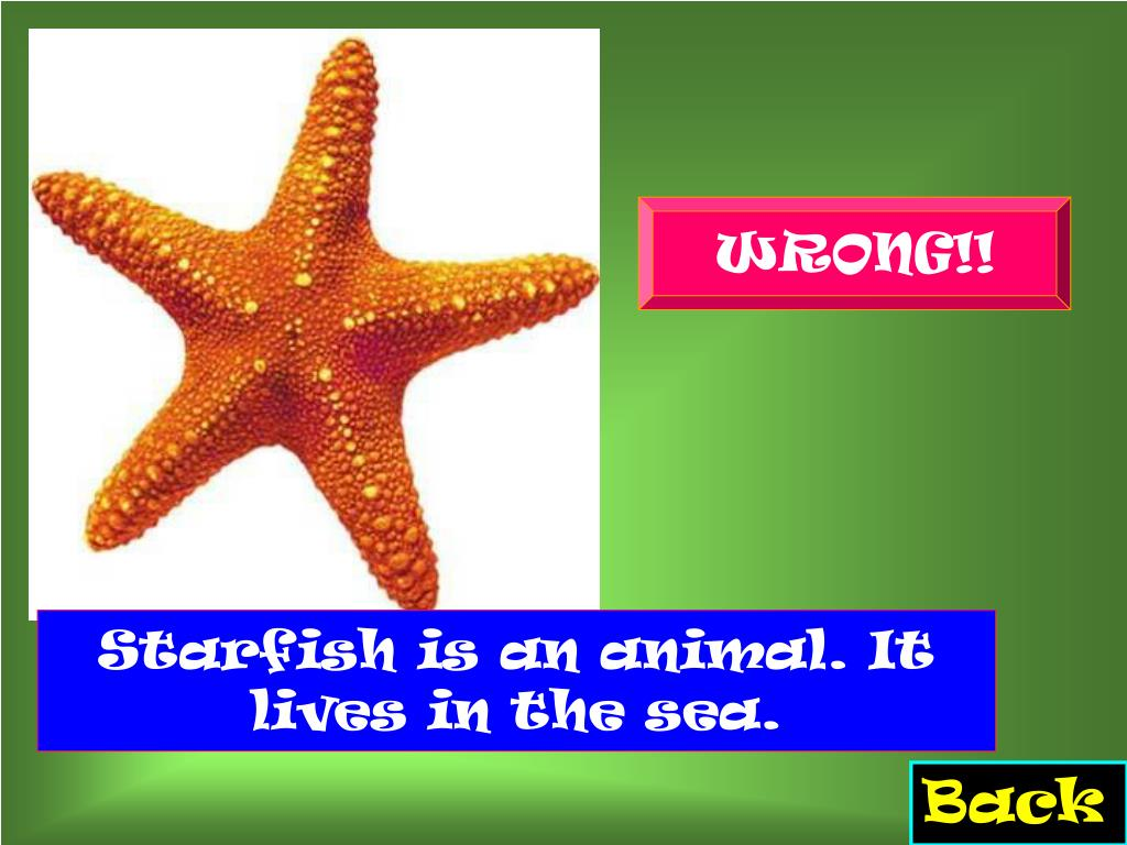 Starfish is an animal. It lives in the sea.