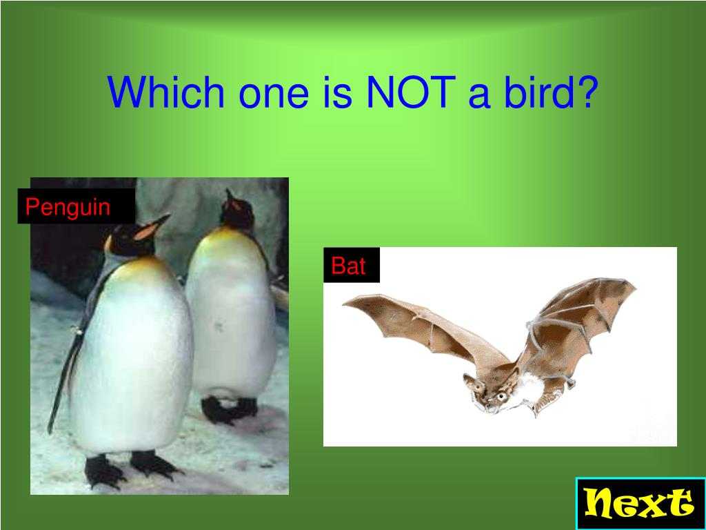 Which one is NOT a bird?