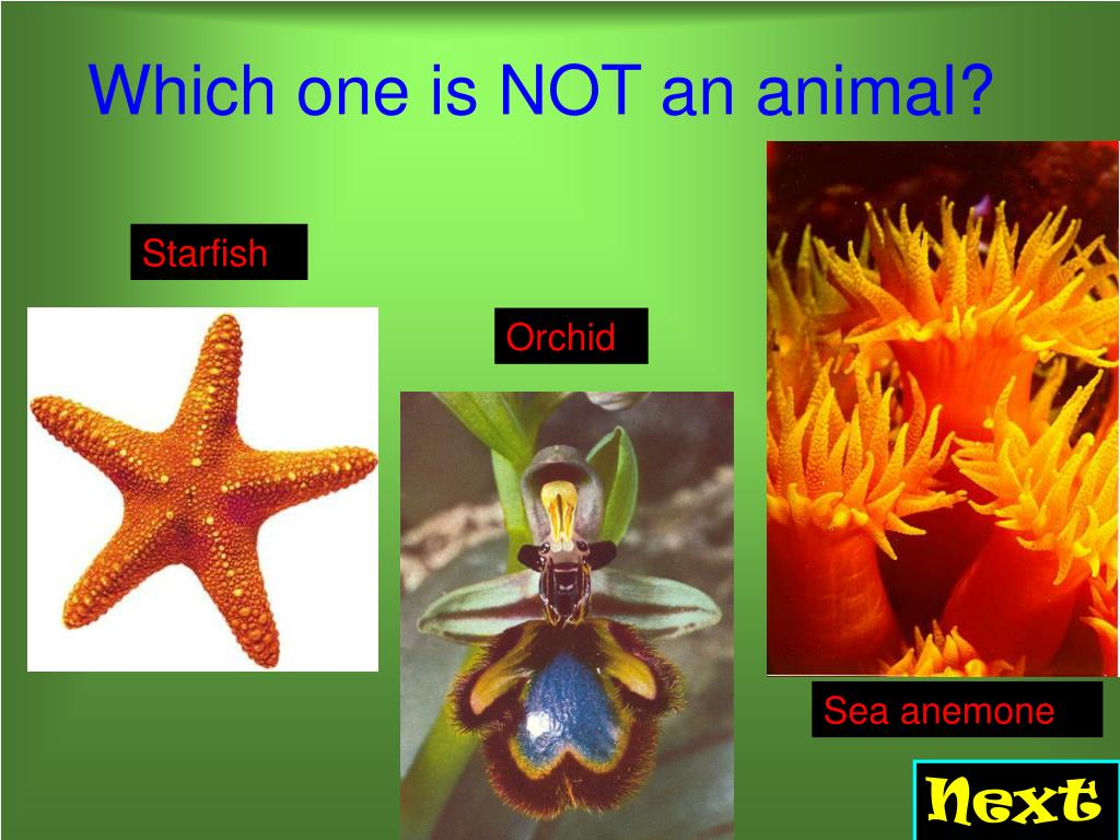 Which one is NOT an animal?