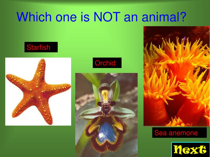 Which one is not an animal l.jpg
