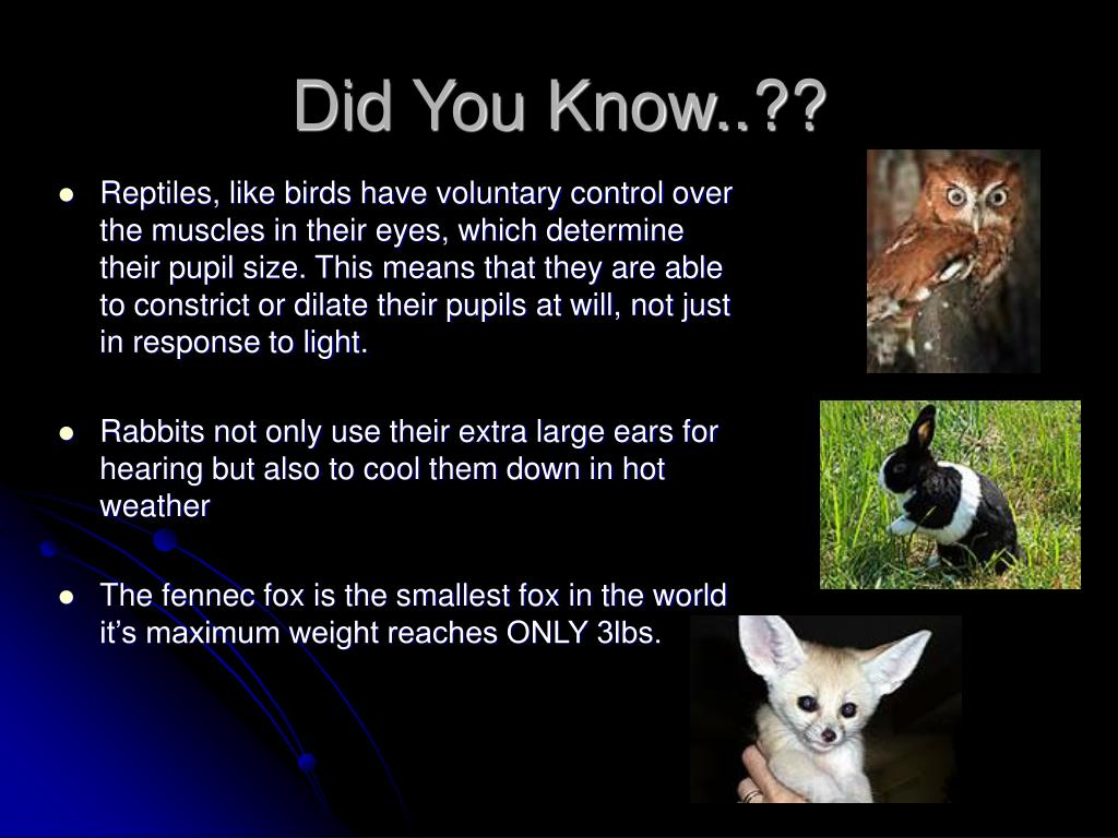 Did You Know..??
