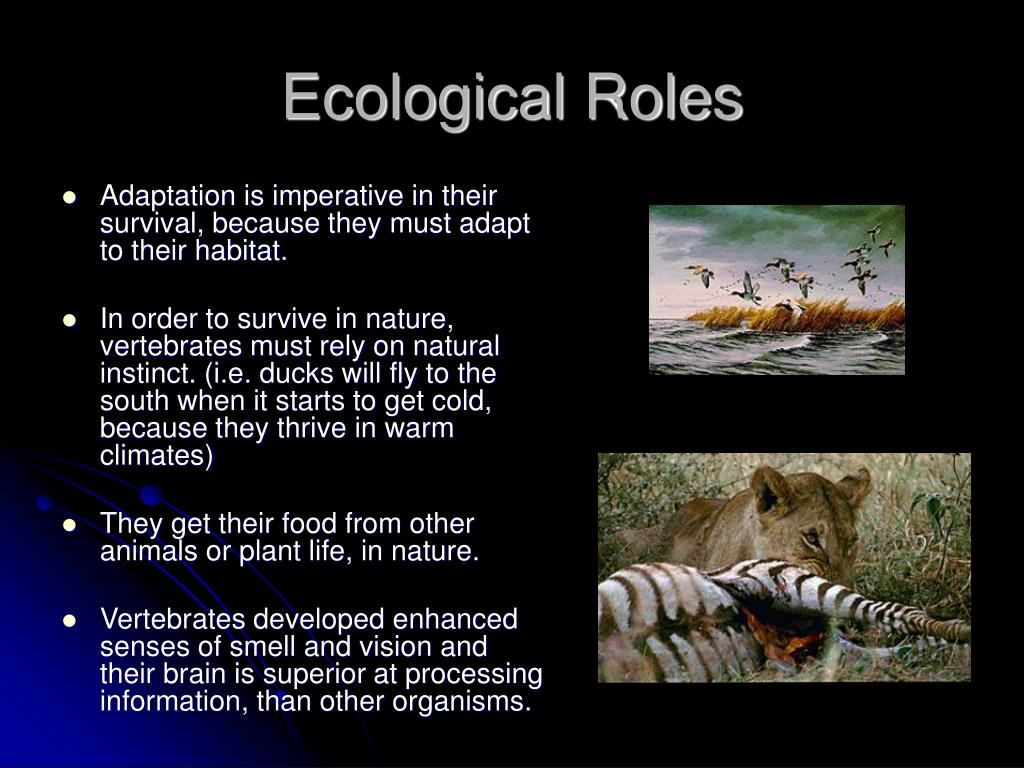 Ecological Roles