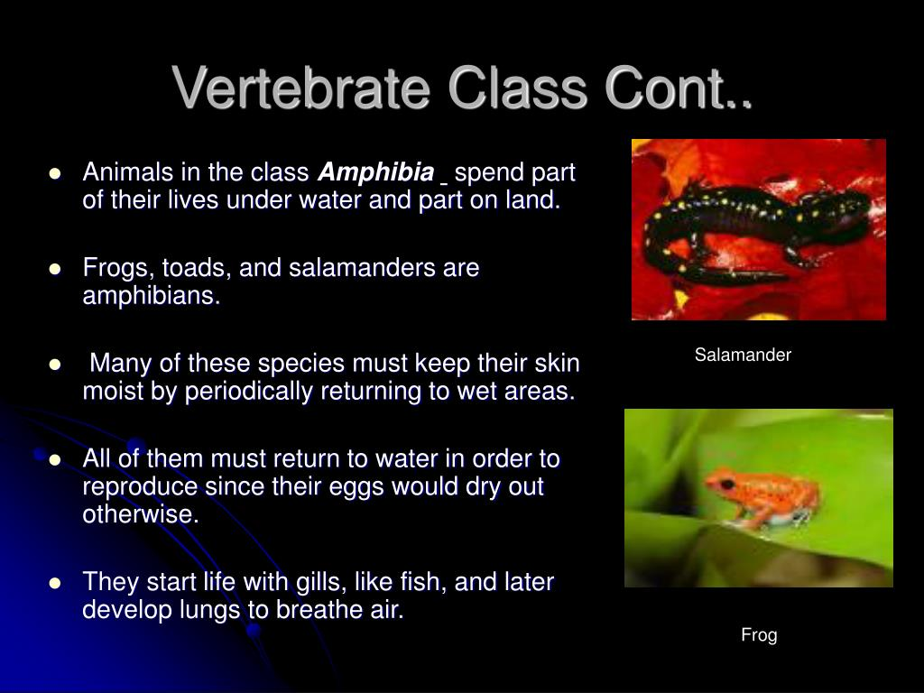 Vertebrate Class Cont..