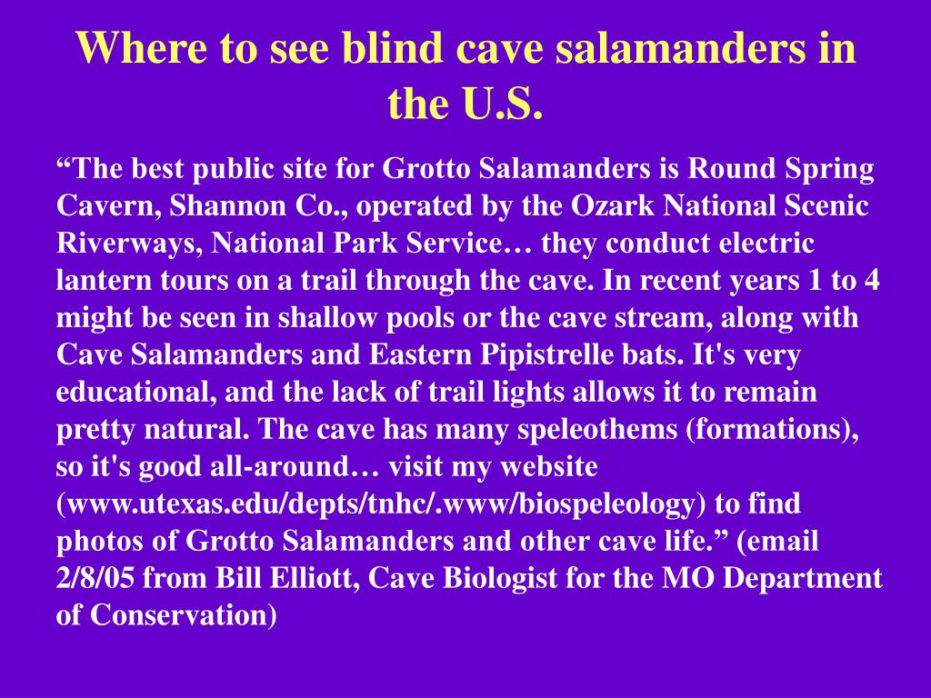 Where to see blind cave salamanders in the U.S.