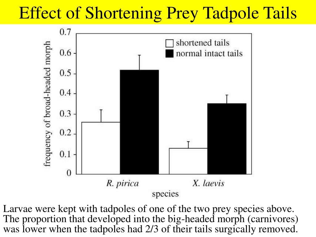 Effect of Shortening Prey Tadpole Tails