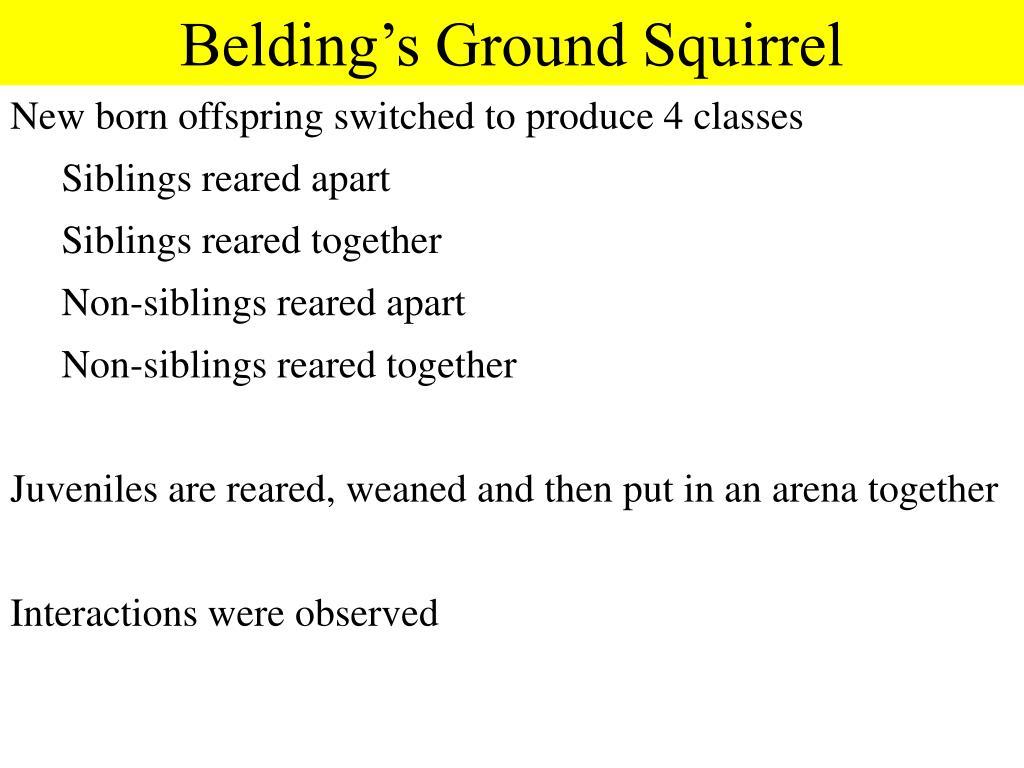 Belding's Ground Squirrel
