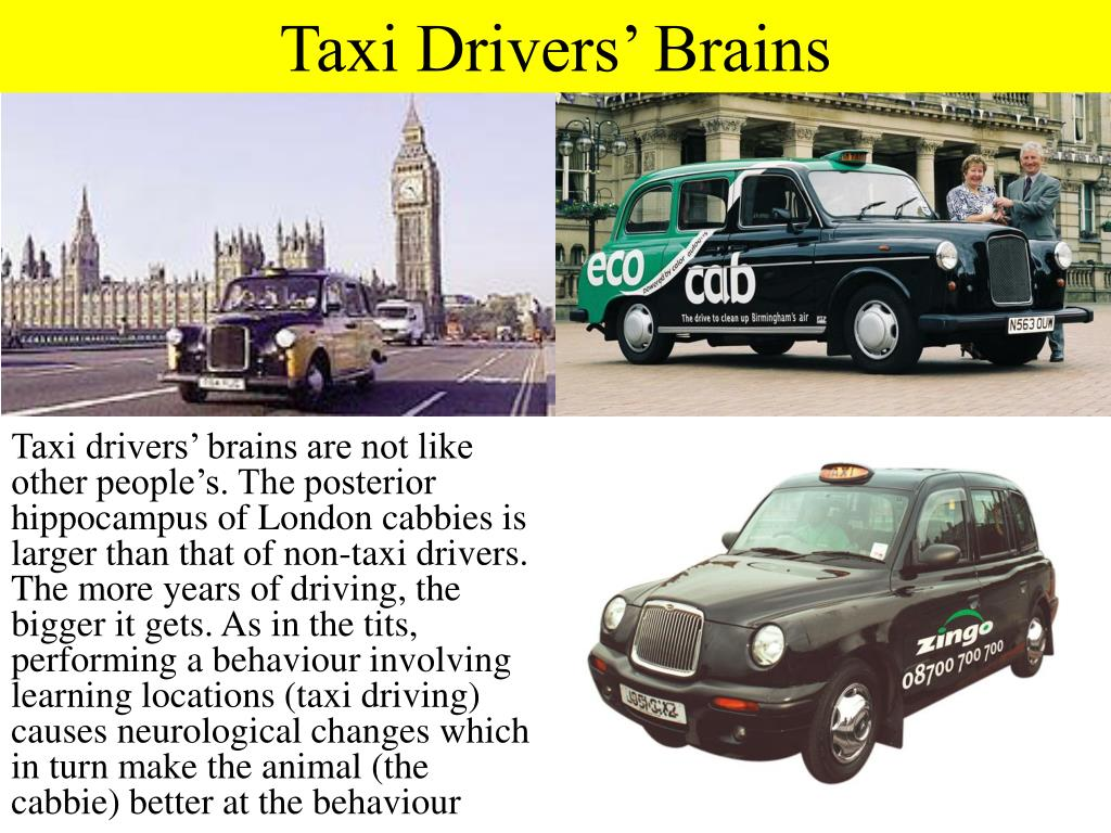 Taxi Drivers' Brains