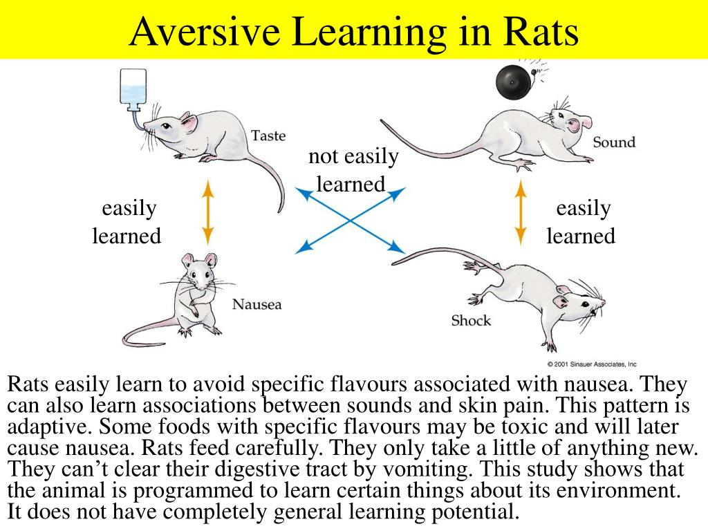 Aversive Learning in Rats