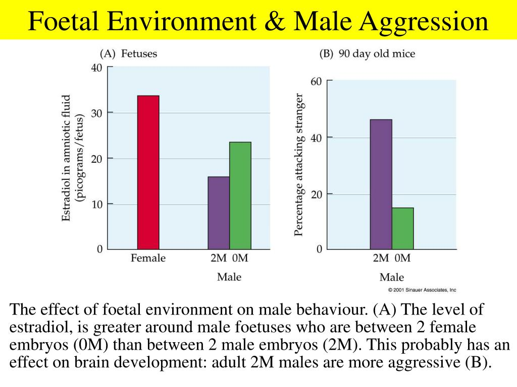 Foetal Environment & Male Aggression