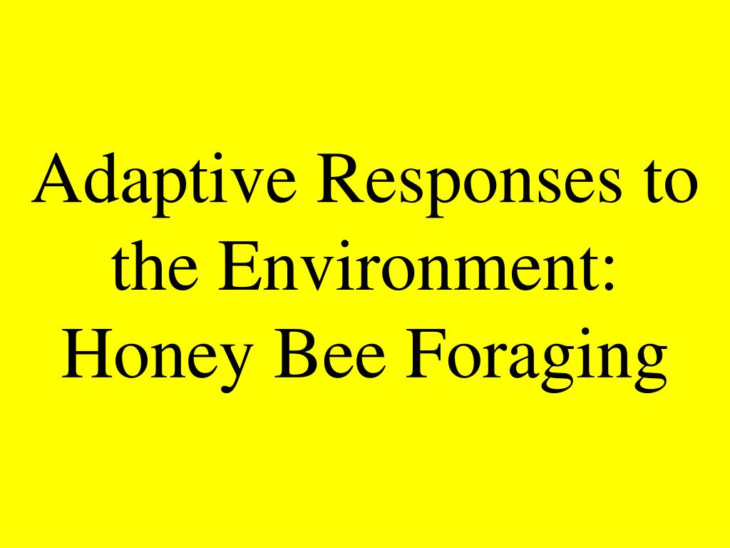 Adaptive Responses to the Environment: Honey Bee Foraging