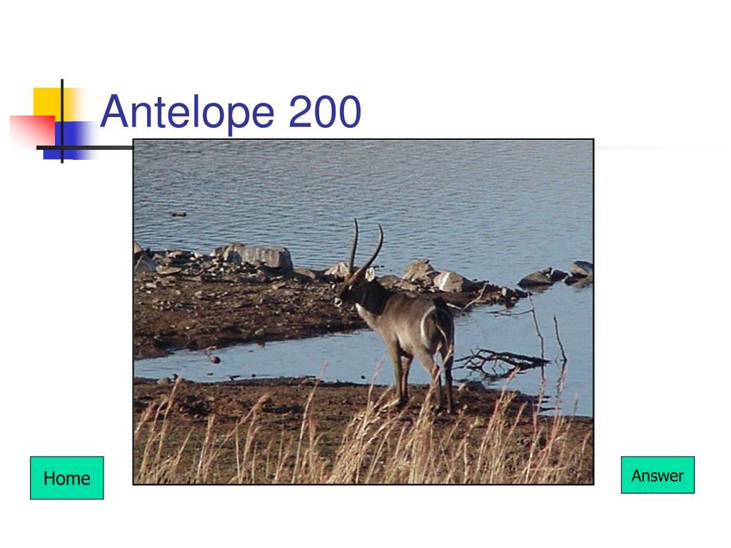 Antelope 200